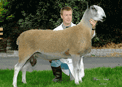 Click here for BFL Sheep